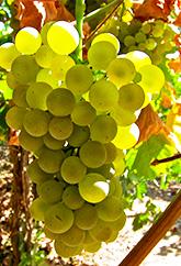 grape-4