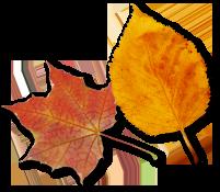 leaf-4