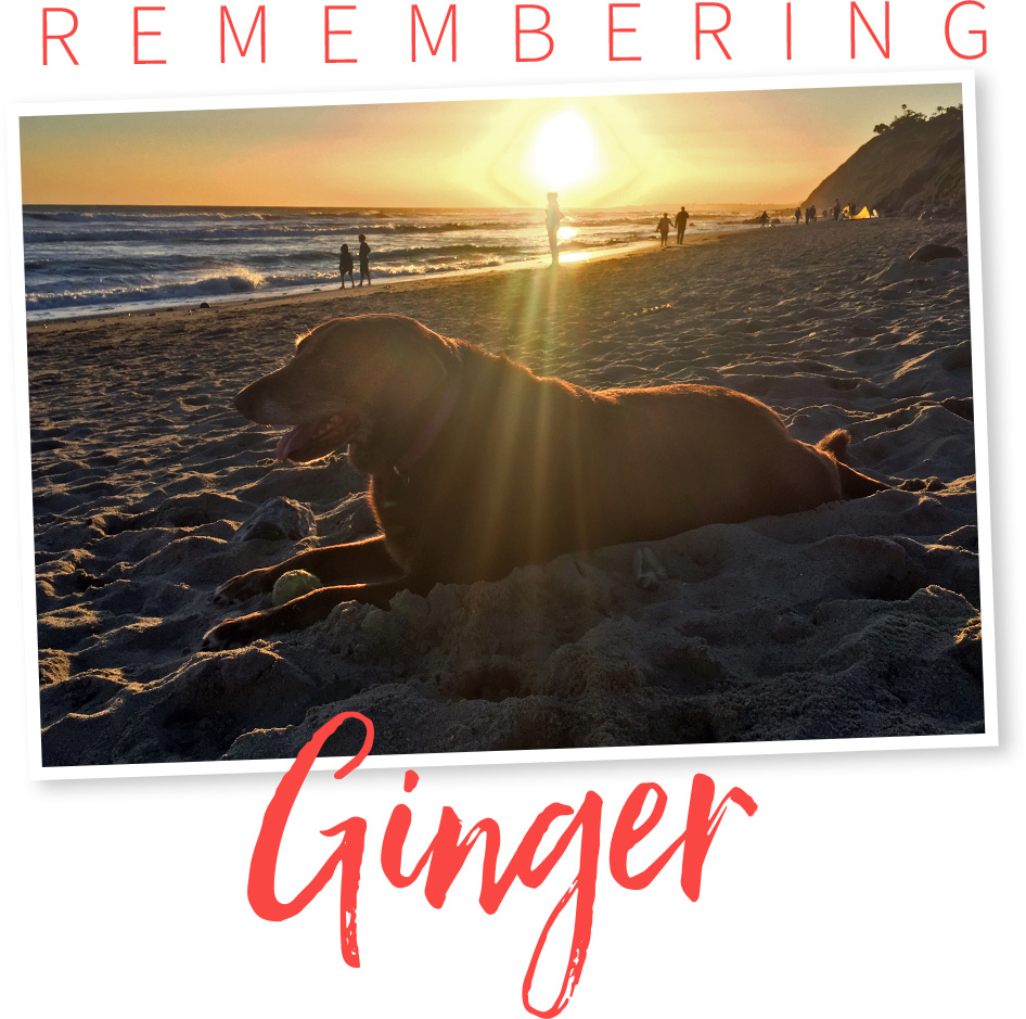ginger-hdr
