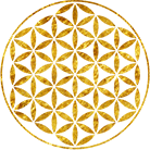 amy-logo